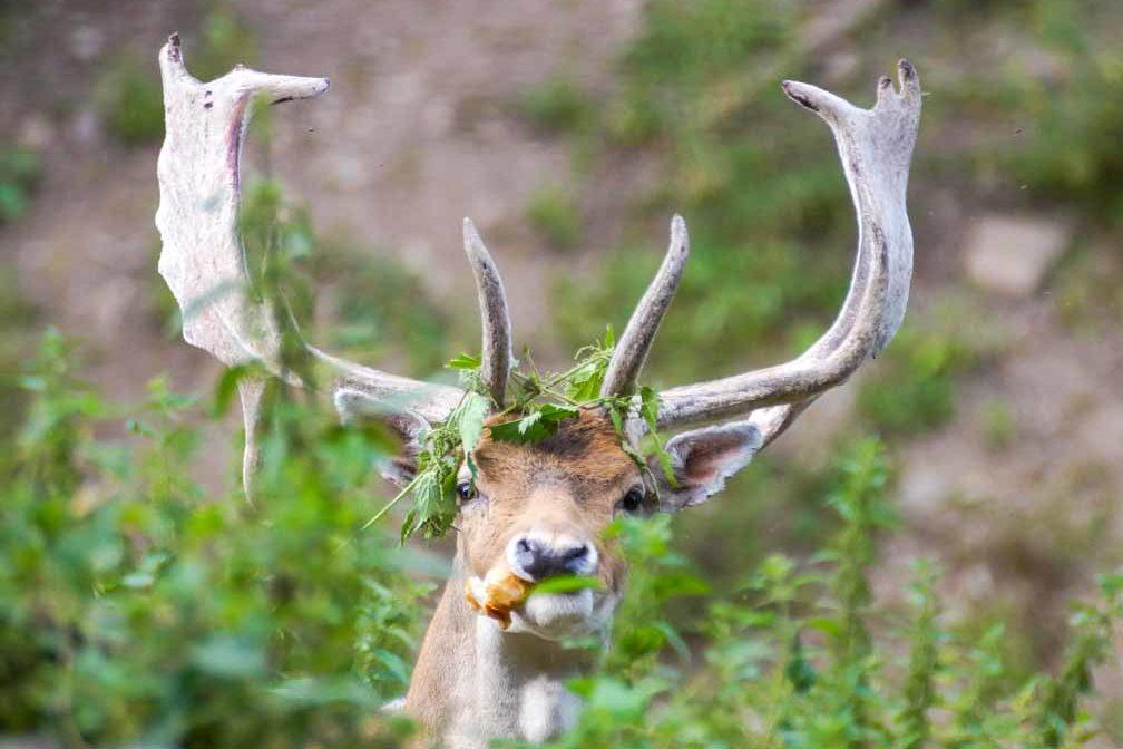 wildpark_schmidt-damwild1