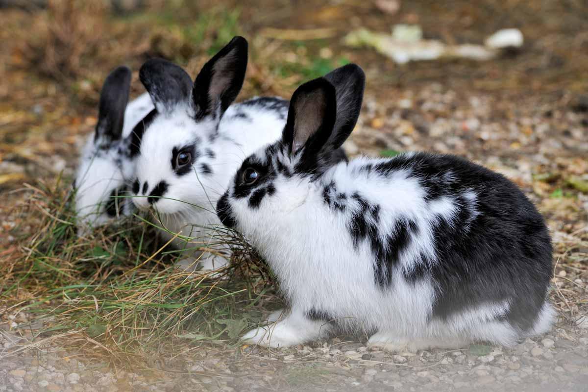 wildpark_schmidt-kaninchen1
