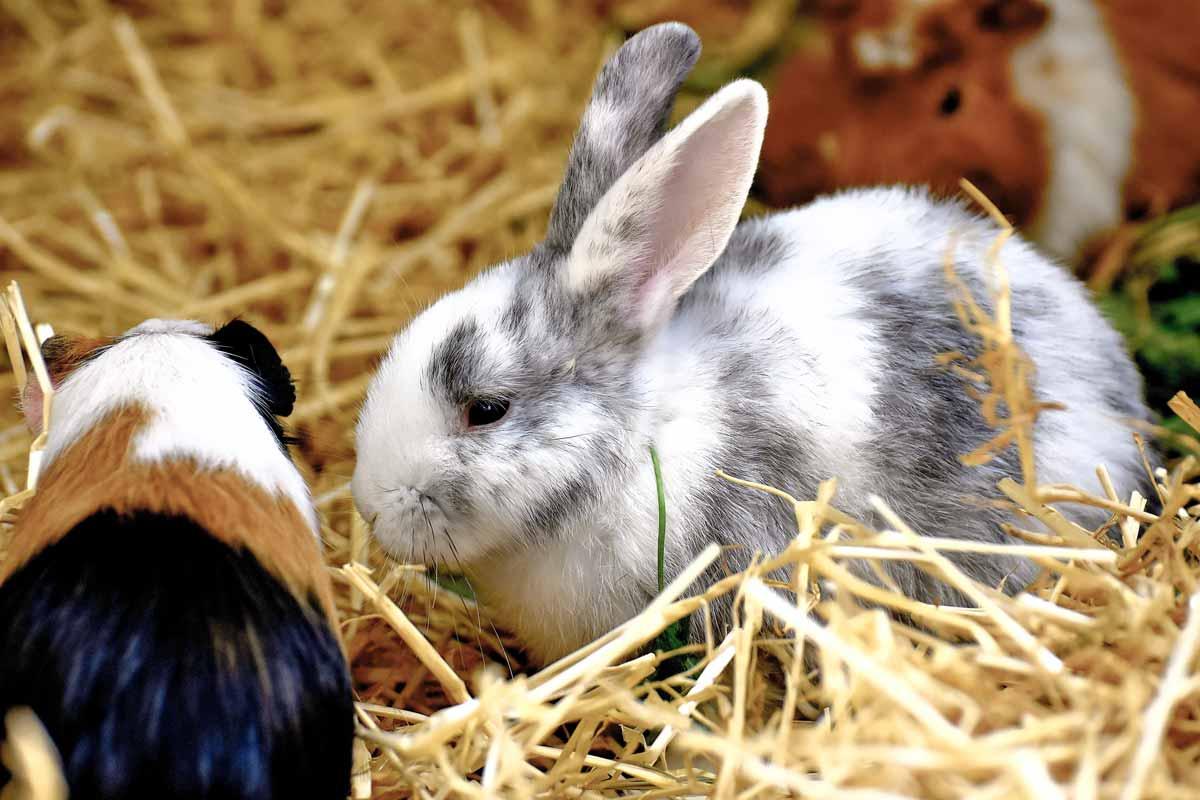 wildpark_schmidt-kaninchen4