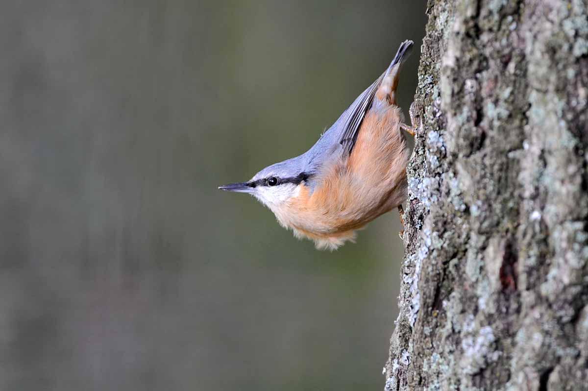 wildpark_schmidt-vogel